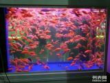 水族艺馆 鱼缸热带鱼观赏鱼水族箱专卖