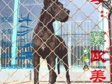 有没有卖带血统的大丹犬要包健康包纯种的
