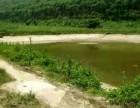 出租:江门鹤山市120亩鱼塘养殖场