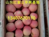 烟台苹果市场_苹果基地_山东红富士苹果价格