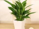 番禺植物出租 番禺植物銷售 番禺植物租賃