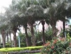 绿景蓝湾半岛128平出租,业主直租,房源真实,看房方便