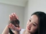 活宠飞鼠。迷你刺猬,蜜袋鼯,魔王松鼠幼崽