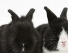 本人养的兔子便宜出售