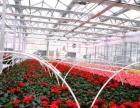 花卉温室大棚的安装和设计