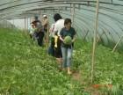 上海浦东农家乐一日游 烧烤 钓龙虾 采摘葡萄 西瓜