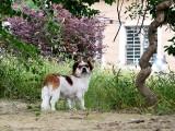无锡宠物寄养一犬一舍,每只狗狗都有自己额独立空间