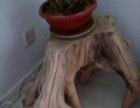 两小一大树根