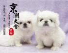 泉州哪里有卖京巴犬的