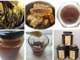 重庆原始森林的正宗高山土蜂蜜 纯蜂蜜