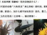 九江六角恐龙出售