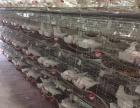 驻马店鸽子养殖场 你养殖 我回收