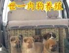 肉狗养殖场 肉狗养殖加盟 小本投资养殖