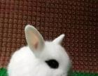 出售各种宠物兔