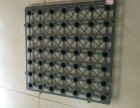 供应南沙排水板,广州塑料排水板规格,白云PVC排水板厂家