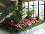 苏州金丝雀园艺 专业植物租赁