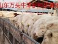 银川毛驴养殖场供应德州驴三粉驴价格低改良肉驴苗