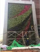 新品立体绿化植物,哪里有卖 山东立体绿化植物