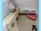 北京朝陽京廣橋提供寵物寄養包月寄養包年寄養散養接送寵物