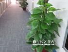 佛山顺德办公室绿植租摆花木花卉出售