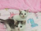 可爱猫咪寻找新家