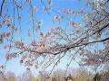 南京玄武湖-中山陵-夫子庙1日游|合肥周边一日游