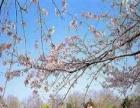 南京玄武湖-中山陵-夫子庙1日游 合肥周边一日游
