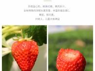 北京代运营公司专业淘宝运营店铺天猫运营网店京东运营收费情况