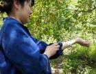 位于张湾区七里垭村挂果樱桃树出售