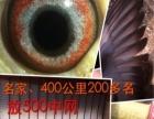 赛鸽出售,地址:深圳市光明新区。