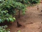 出租宜良土地 14亩带房屋庭院