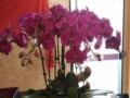 鲜花绿植绿植、绿植租赁、绿化养护、花卉租摆、办公室