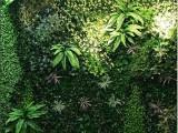 光明新区公明花木,室内盆栽,室外花卉出售,出租