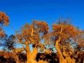 【国庆特辑】在大漠童话里相遇,去额济纳旗的秋天撒野