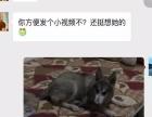 宠物家庭式寄养,诚信保障 大庆路 东高新