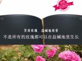 芳青源品-玫瑰红茶