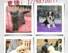 南京宠伴小精灵宠物美容师培训学校新学期开讲啦!!!