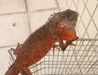 宠物专卖,可爱的宠物应有尽有,松鼠,仓鼠,乌龟,