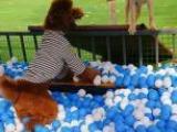 石家庄有素宠物寄养狗狗寄养公园
