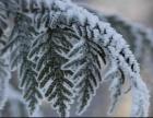 秋季童话和冬季风情