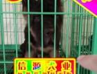 买纯种健康德牧犬 赠送用品 - 签质保协议
