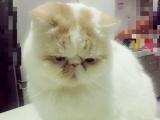 加菲猫转让2000—30000