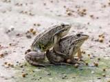 创造财富价值,成就巨大成功,就选湖北枝江汇泽青蛙养殖