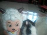 兔兔疫苗全打,各种花色垂耳,侏儒道奇,毛毛兔随你挑选,全国各