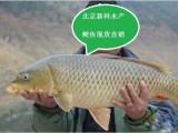 北京新科水产淡水鱼苗出售 放生鱼苗价格 观赏鱼苗批发