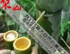 福建竹筒酒厂家招全国代理经销商