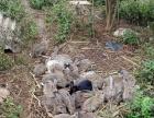 源生态兔子养殖场