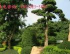园林绿化、庭院景观、屋顶花园、假山鱼池、苗木种植等