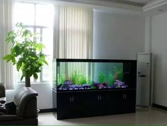 鱼缸专业维护 维修