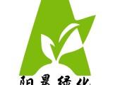 广州萝岗科学城 专业提供办公室植物盆栽租赁出租 花木养护管理